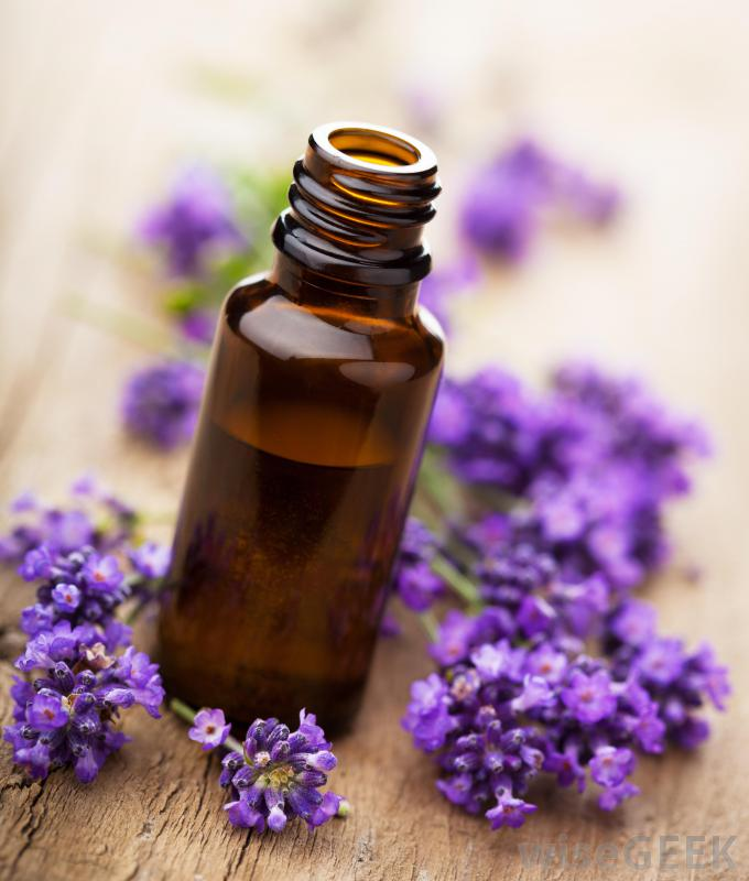 Lavender Bloom Fragrance Oil